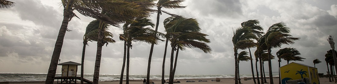 Trees swaying in the strong winds of a hurricane.